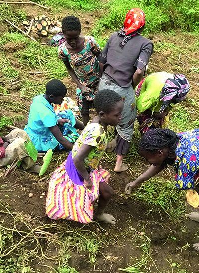 De jeunes élèves récoltent des pommes de terre. Photo: Umbo Salama