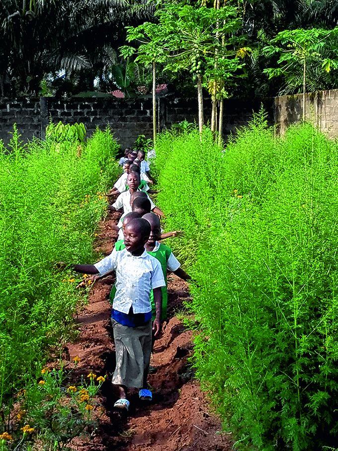 À Baningbé, les enfants de l'école agricole Laudato Si apprennent l'agroécologie et la permaculture. Photo : Maison de l'Artemisia